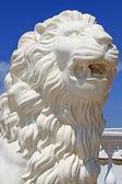 Lion's head — Stock Photo