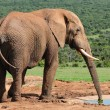 Elephant drinking water at Harpoor Dam — Stock Photo