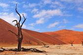 Einsamer baum skelett, deadvlei, namibia — Stockfoto