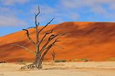 Eenzame boom skelet, deadvlei, namibië — Stockfoto