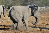 Elephant squabble, Etosha National park, Namibia — Stock Photo