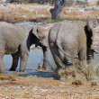 Elephant mud bath, Etosha National park, Namibia — Stock Photo