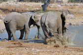 Elephant mud bath, Etosha National park, Namibia — Stock Photo