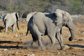 Elephant squabble, Etosha National park, Namibia — Stock Photo
