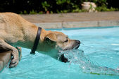 Dog playing with water — Stock Photo