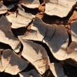 Cracked mud at Sossusvlei, Namibia — Stock Photo