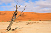 Lonely tree skeleton, Deadvlei, Namibia — Stock Photo