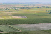 Vineyards at Keimoes — Stock Photo
