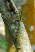 Climbs the wooden lizard — Stock Photo