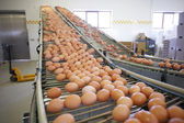 Eggs factory — Stock Photo