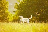 Dog in park — Stock Photo