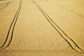 Tractor trail in wheat field — Stock Photo