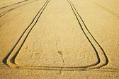 Sentier du tracteur dans le champ de blé — Photo