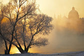Frosty morning — Stock Photo