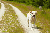 Dog on the road — Stock Photo