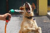 Hot day with dog — Stock Photo
