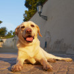 Dog in morning light — Stock Photo #28904789