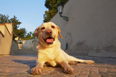 Dog in morning light — Stock Photo
