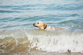 Dog and sea — Stock Photo