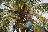 Coconut man — Stock Photo