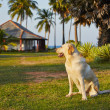 Dog on vacations — Stock Photo