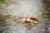 Heavy rain — Stock Photo