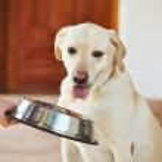 Hungry dog — Stock Photo #38551915