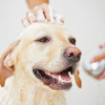 Dog in bathroom — Stock Photo #38702853