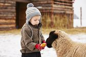 Boy on the farm — Stock Photo