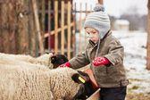 Boy on the farm — Photo