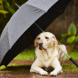 Dog in rain — Stock Photo