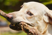 Pes s holí — Stock fotografie