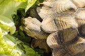 Schildkröte — Stockfoto