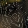 Gross spiderweb on nature, without spider, square photo — Stock Photo