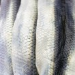 Stock Photo: Close-up of Raw Herrings