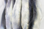 Close-up of Raw Herrings — Stock Photo