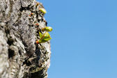 A sprout on a tree — Stock Photo