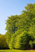 Large trees with green leaves — Stock Photo