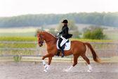 Lady on horse — Stock Photo