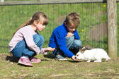 Kids feeding rabbits — Stock Photo