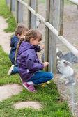 Two kids feeding rabbits — Stockfoto