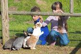 Kids feeding rabbits — Stock Photo
