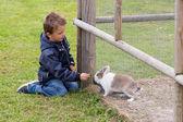 Boy feeding rabbit — Stock Photo