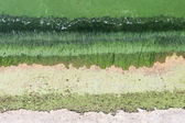 Algae water — Stock Photo