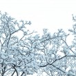 Frost tree — Stock Photo #37268819