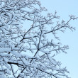Stock Photo: Frost tree