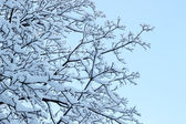 Frost tree — Stock Photo