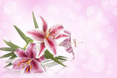 Pink exotic flower — Stock Photo