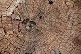 Texture truncated tree — Stock Photo