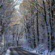 Snowcovered Road in Forest — Stock Photo